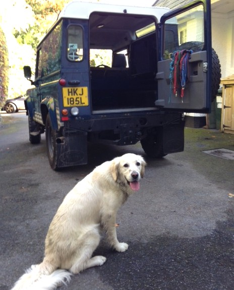 our mutt Boo in Landrover